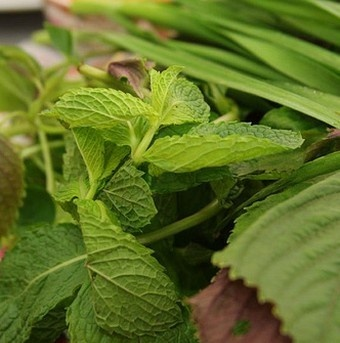 Properly means you ll have flavourful herbs for cooking all year long