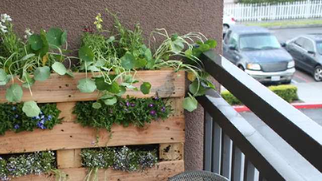 Turn a wood pallet into a vertical garden lifehacker for How to make a vertical garden using pallets