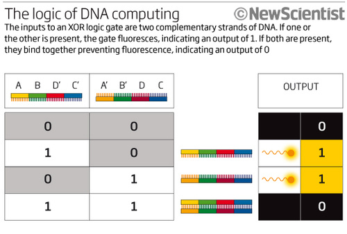 DNA Logic Gates Could Bring Injectable  Biocomputers