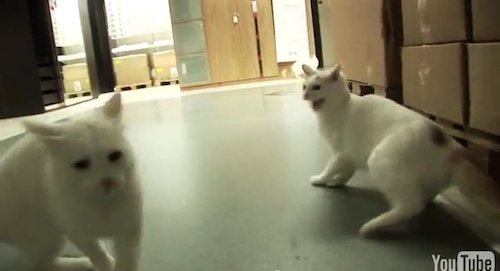 IKEA Let Loose a Herd of 100 Cats Into Store to 'See What Happens'