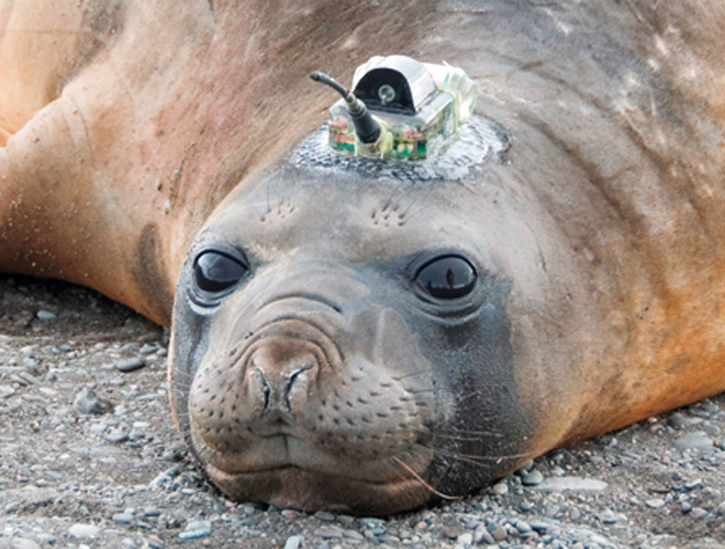 Seals are helping chart the ocean floor gizmodo australia for 10 facts about the ocean floor