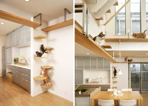 This Is the Perfect House If You Are a Cat