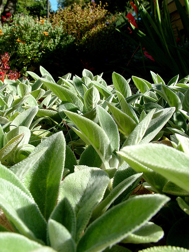 Choose plants that need less water for a low maintenance for Low maintenance green plants